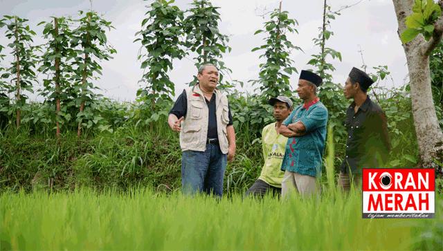 Hbk Agar Perusda Tidak Rugi Arahkan Ke Sektor Pertanian Koran Merah